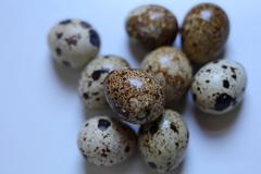 Japanese Quail Eggs