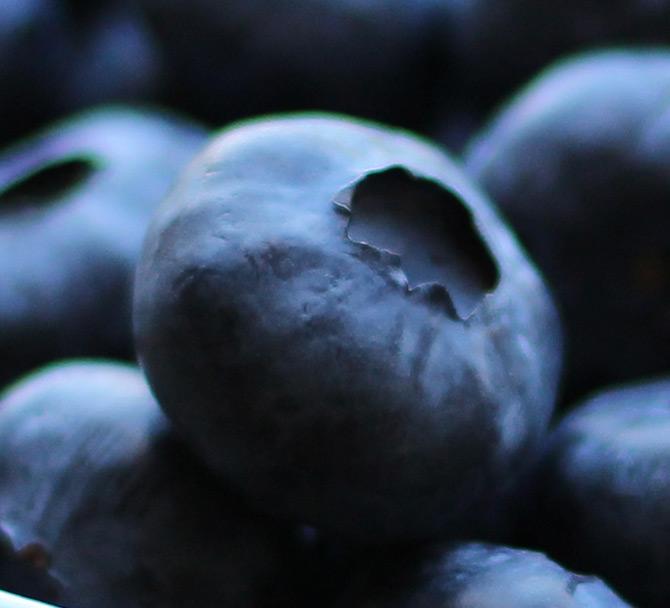 a single blueberry