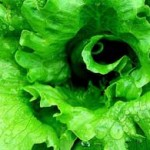 Lettuce Juice Health Benefits
