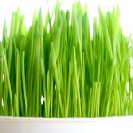 Useful Properties of Wheatgrass Juice
