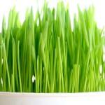 Useful Properties of Wheatgrass Juice