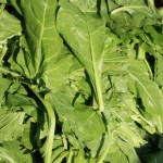Health Benefits of Raw Baby Spinach Leaves