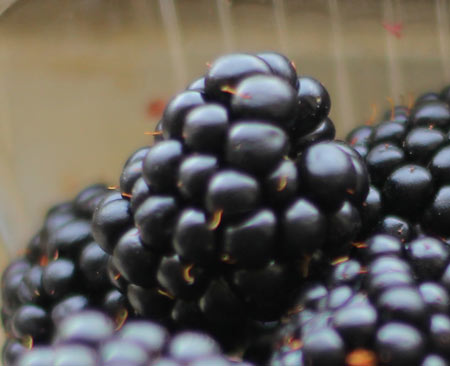 blackberries-3