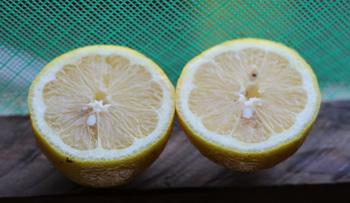lemon-two-halves