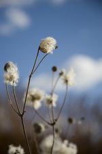 pollen producing plant